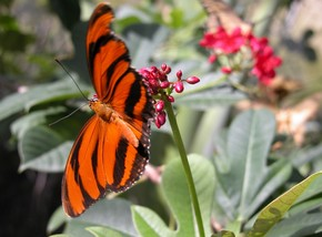 Butterfly Farm - Tourism Guide