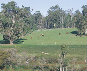 Scenic Drives - Bunbury Collie Donnybrook - Tourism Guide
