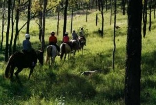 Hunter Valley Horse Riding and Adventures - Tourism Guide