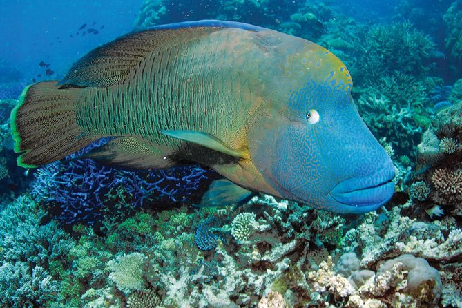 Poseidon Outer Great Barrier Reef Snorkeling And Diving Cruise From Port Douglas - Tourism Guide