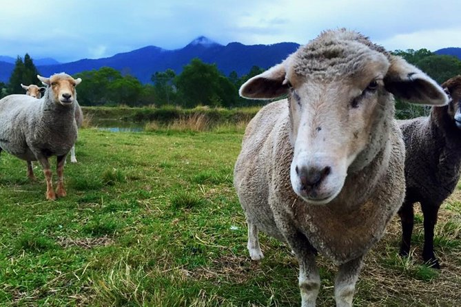 Trevena Glen Farm Animal Experience - Tourism Guide