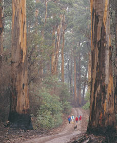 Beedelup National Park - Tourism Guide